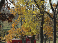 Monett in Autumn . . .